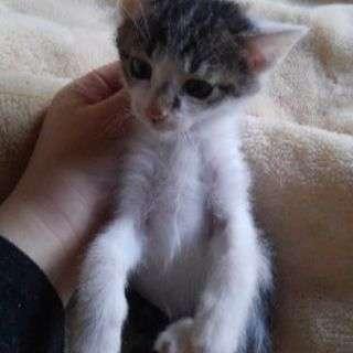九月生まれ子猫の里親募集