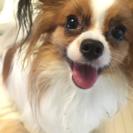 犬友達になってください(*゚ー゚*)