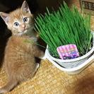 子ネコ6匹くらいおります。可愛い子猫の里親募集