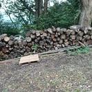 伐採木もらって下さい!!
