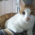 1歳半の兄弟猫さんの里親様を募集しています
