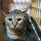 麦わら姉妹猫クル(脱走中) − 千葉県