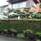 お庭屋ヘルプマン(草刈り・剪定・木伐採) 職人ですが安くします。
