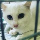 保護猫 6か月のメス