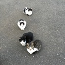 甘えん坊の子猫の里親探しています。