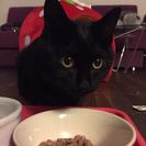 生後9か月の黒猫女の子