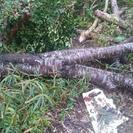 庭木伐採中。薪などに。