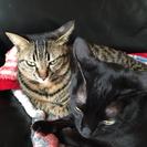 2歳のキジトラと黒の猫ちゃん