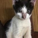 白黒の子猫ちゃん
