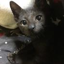 黒の子猫ちゃん
