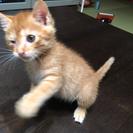 子猫ちゃん♡里親さん決まればワクチンします