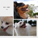 犬友達(^•ﻌ•^)