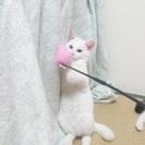 にぃにぃ3ヶ月の白猫王子様
