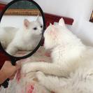 大きめな鏡です〜