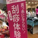 ベリーボタン「乙女のお祭」vol.2