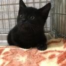 黒猫くん 約3カ月
