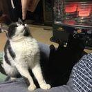 仲良し甘えん坊の白黒・黒猫兄弟