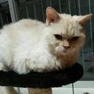 ちょっと変わった毛質のおとなしい猫さん