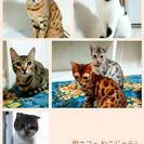 一宮市で人気の猫カフェ