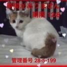 可愛い子猫ちゃんです。助けて下さい。