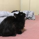 元気な黒猫ちゃんです。