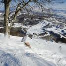斑尾高原スキー場 ☆リフト1日クーポン券 ※他スキー場のクーポン券...