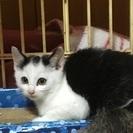 黒白子猫ちゃん