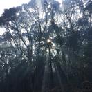 伐採ws第5回〜未来を選ぶ選木の技術〜