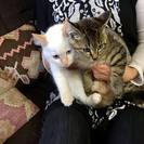 白とキジのキュートな姉妹♪
