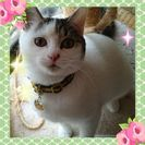 可愛い☆女の子7ヶ月