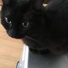 1歳の黒猫
