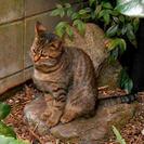 かわいい野良のトラ子猫、飼って下さい