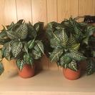 造花 観葉植物 2個セット