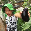 手ぶらで行けちゃう!有機・無農薬栽培の貸し農園「シェア畑神戸西」