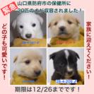 防府市の保健所に20匹の犬が収容されました!