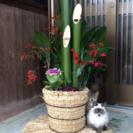 門松用の竹