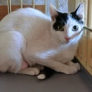 すらりとした黒白美猫