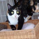 飼育放棄されたメス成猫の里親募集