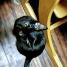 黒猫 4ヶ月