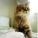 チンチラ♀モナちゃん推定8歳2.5キロ