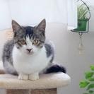 6か月、避妊、ワクチン済みのきれいでおとなしい子猫(メス)
