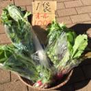 お鍋用冬野菜 100円 限定10名様 本日分終了しました。ありがと...