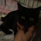 生後4カ月の黒猫女の子♀
