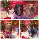 ペットと飼い主さんの新年オフ会