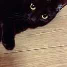1歳半の黒猫ちゃん(♀)です!