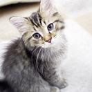 子猫の里親募集中です。保護猫もいる、お洒落な猫カフェ