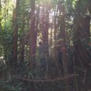 伐採WS第6回〜あなたが守る未来の山林〜