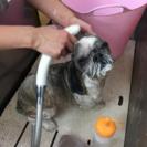 Pet's Lifeはペットの健康と暮らしを楽しむお手伝いをする無...