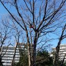 お庭の手入れ 大高木 優香園