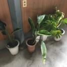 観葉植物 5個 ➕ ハイビスカス